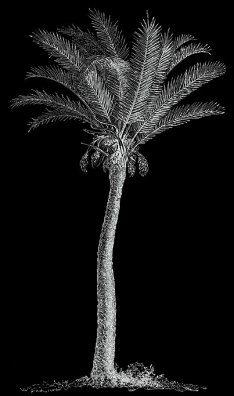 Palm grove black